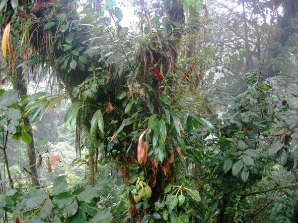 Photo of Epiphytes near Santa Elena, Costa Rica