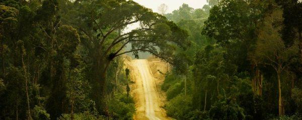 Road through rainforest