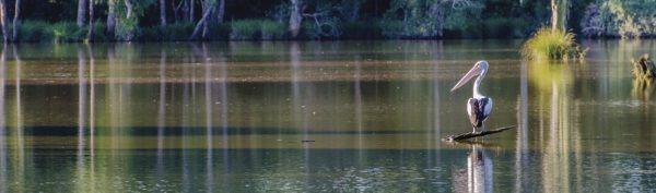 Seaham Swamp Nature Reserve