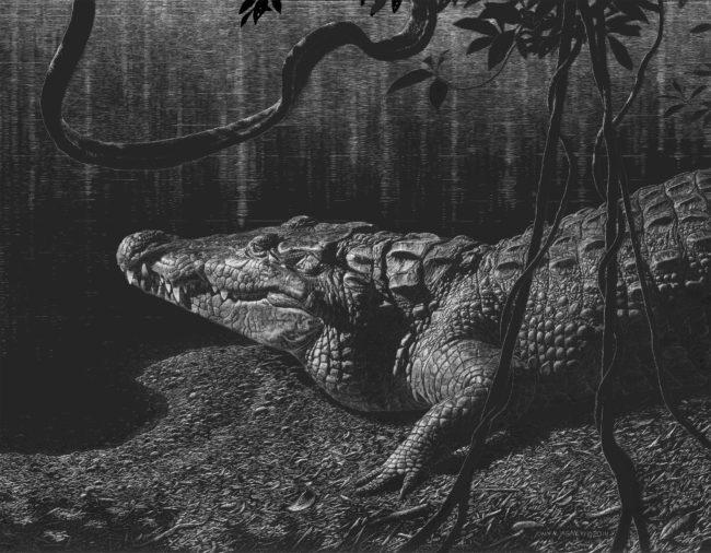 "Morelet's Crocodile (Morelet's Crocodile) 2013, Scratchboard, 16"" x 19"""