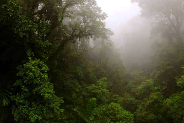 Photo of tropical rainforest