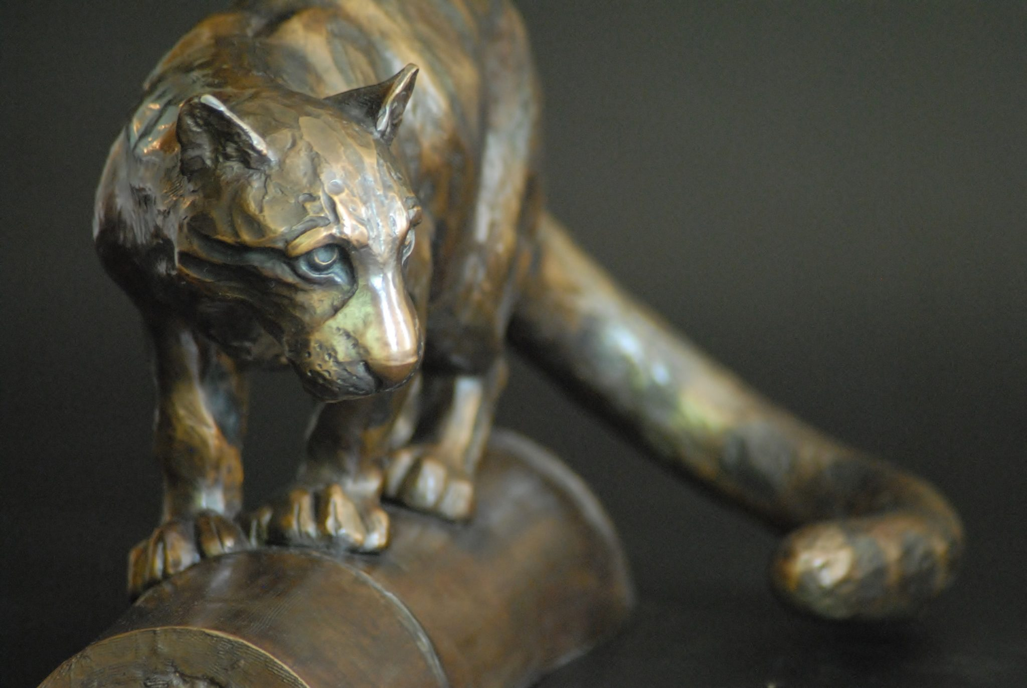 Clouded Leopard crouching. Bronze