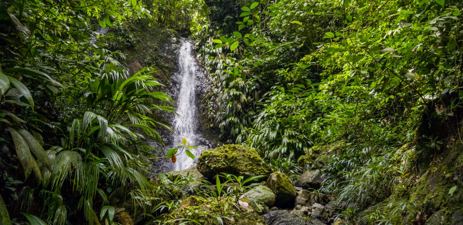 protected streams in the Mamoní Valley Preserve, Panama